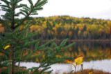 Fall colors on the BWCA by neilbakker, photography->landscape gallery