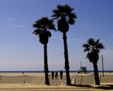 Three Palm Trees by bikolnon, Photography->Shorelines gallery