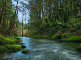Deep Green Downstream #2 by busybottle, photography->landscape gallery