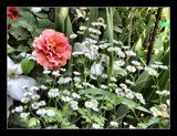 For Montydon(Jacko)While he is Hospitalized. by verenabloo, Photography->Flowers gallery