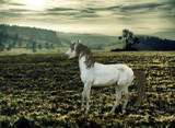 Behind Blue eyes by rhinebeck, photography->manipulation gallery