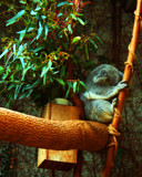 Nodding Off by casechaser, photography->animals gallery