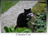 it's a Cheshire Cat... by fogz, Photography->Pets gallery