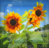 Jersey Sun by Mannie3, photography->manipulation gallery
