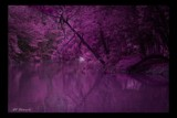 You want Purple... by avedeloff, Photography->Landscape gallery