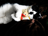 Figaro 'n Theodore by Kevin_Hayden, photography->pets gallery