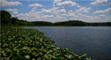 A Summer's Day At Shock Lake by tigger3, photography->nature gallery