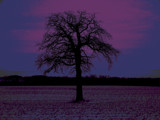 Tree dusk. (purple/blue) by bolshy, Photography->Manipulation gallery