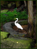 Crane by ccmerino, photography->birds gallery