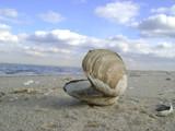 Sea shell along the sea shore by m_koempel, Photography->Shorelines gallery