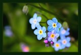 Not Forgotten by LynEve, photography->flowers gallery