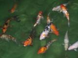 indoor fish by Mvillian, Photography->Animals gallery