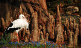 The Hermit by cioccolato, Photography->Birds gallery