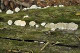 Mushroomed 2 by prashanth, Photography->Mushrooms gallery