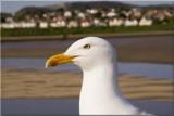 Captain birds eye.......... by fogz, Photography->Birds gallery