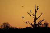 Time for Bed by SatCom, Photography->Sunset/Rise gallery