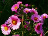 Happy BD BJ! by Paul_Gerritsen, photography->flowers gallery