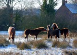 Horses in Winter by lindala, Photography->Animals gallery