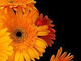 Sunny Inside by Pixleslie, Photography->Flowers gallery