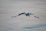 Art of blur - Gullwings by elektronist, photography->general gallery