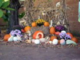 Stalks and Pumpkins and Gourds – Oh My!! by Hottrockin, contests->Fall Festivities gallery