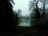 Ice Storm by jojomercury, Photography->Landscape gallery