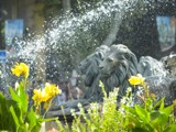Fountain Lions by regmar, Photography->Action or Motion gallery