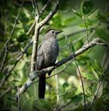 Bird # 50 by picardroe, photography->birds gallery