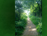 Sun Dappled Nature Walk by Shewolfe, Photography->Manipulation gallery