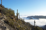 Cactus Sentinels at Squaw Peak by roman1970, Photography->Landscape gallery