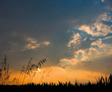 Grassy Silhouette by tigger3, Photography->Sunset/Rise gallery