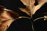 The Leaves by LakeMichigan, photography->nature gallery