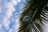 Spikey Palm Tree by Lxin, photography->skies gallery