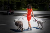 The dog walker by carlosf_m, photography->people gallery