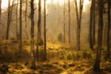 Småland by Blabarspaj, Photography->Landscape gallery