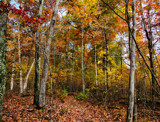 The Woods are Beautiful by cynlee, photography->landscape gallery