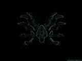 Bone Spider Turtle by monkeypuzzle, photography->manipulation gallery
