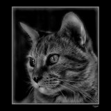 Tigger_B&W by tigger3, contests->b/w challenge gallery