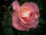 Autumn Rain by LynEve, photography->flowers gallery