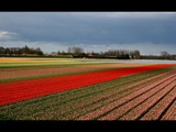 Rainbow tulips by Paul_Gerritsen, Photography->Landscape gallery