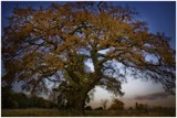a rather large tree by JQ, photography->landscape gallery