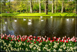 Keukenhof 04 by corngrowth, photography->gardens gallery
