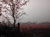 Fog&Field 2 by jojomercury, Photography->Landscape gallery