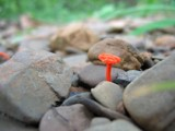 Small orange fungus in the rocks by jdvogt, photography->mushrooms gallery