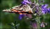 Garden Acrobatics by tigger3, photography->butterflies gallery