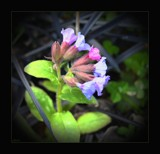 Tiny treasures by LynEve, photography->flowers gallery