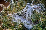 Spiders And Hoarfrost by gr8fulted, photography->general gallery