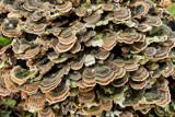 Mushroom reef by Paul_Gerritsen, Photography->Mushrooms gallery