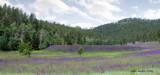 Purple Valley by jodie38mader, Photography->Landscape gallery