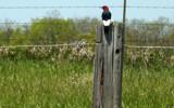 Taking A Break by 0930_23, photography->birds gallery